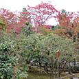 天龍寺の庭にて