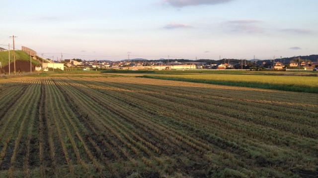 刈り入れ後の秋の田