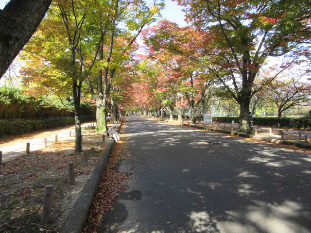 植物園 ケヤキ並木