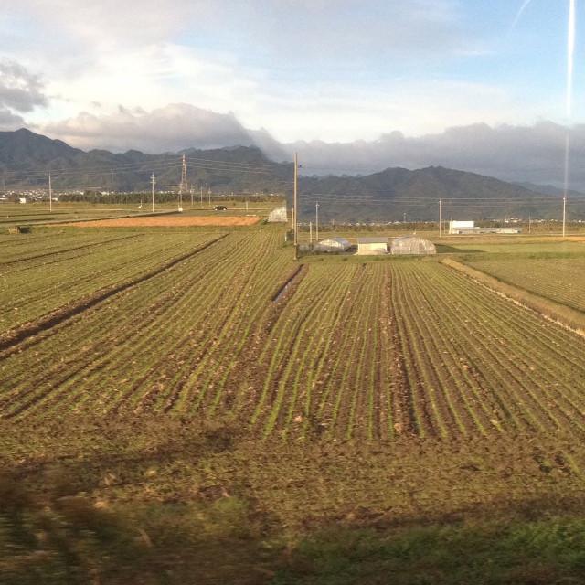 今季初の車窓から麦畑