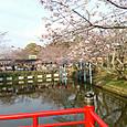3月29日偕楽公園