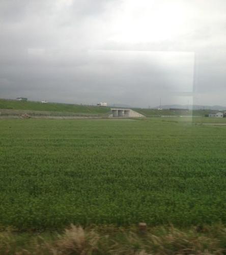 車窓から 1 麦畑