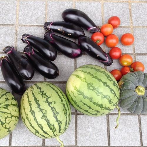 スイカ、茄子、かぼちゃ