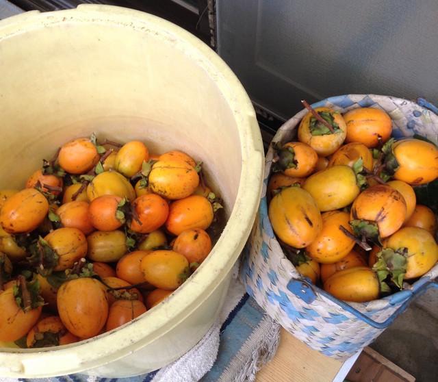 柿がなりました