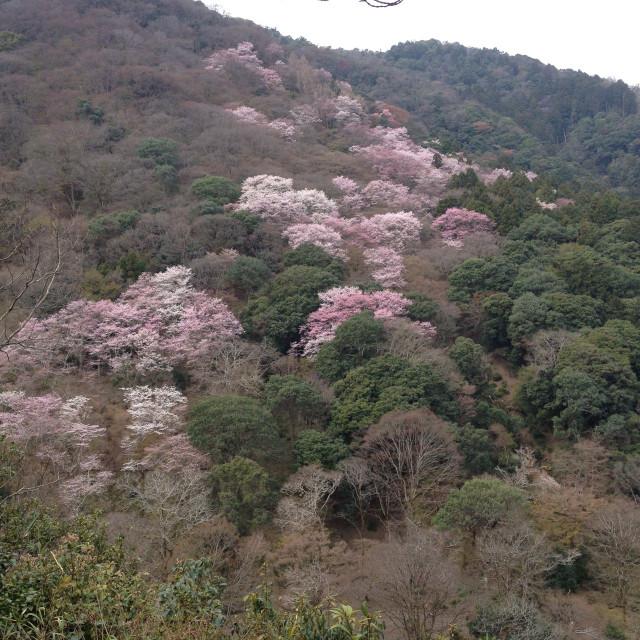 小倉山展望台まであがって嵐山