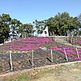 3月23日 古墳公園
